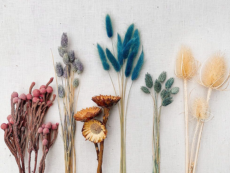 dried out flowers